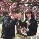 お花見①「枚方八景 牧野公園」